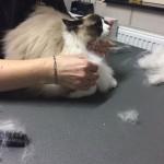 Mauws en Mimi - Weer naar de trimsalon