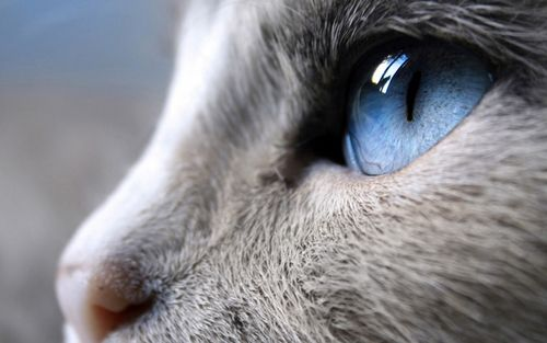 Kattengedicht: Straks... kat