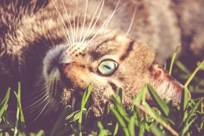 De levensfasen van een kat en de behoefte die daar bijhoren