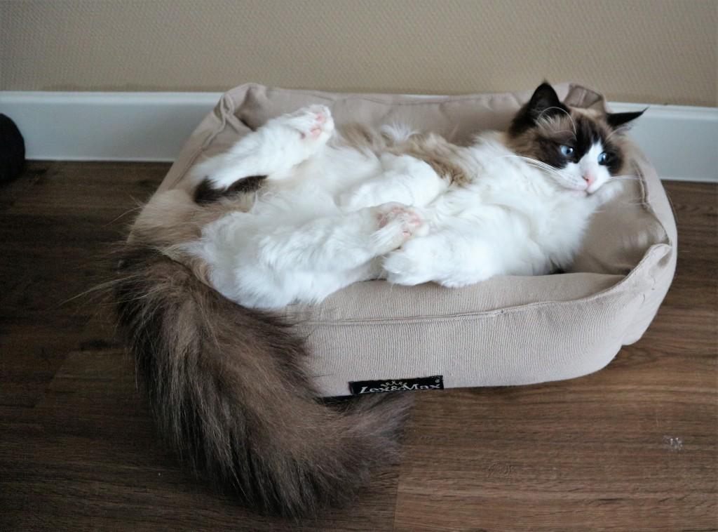 Kattenmand Lex & Max