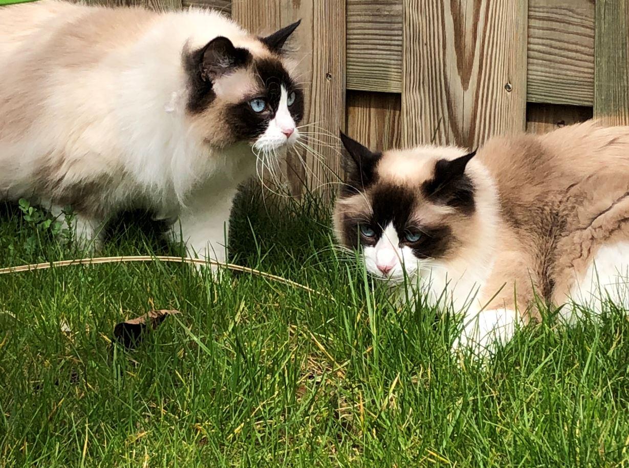 Kattenblog Mauws.nl - binnenkat of buitenkat11