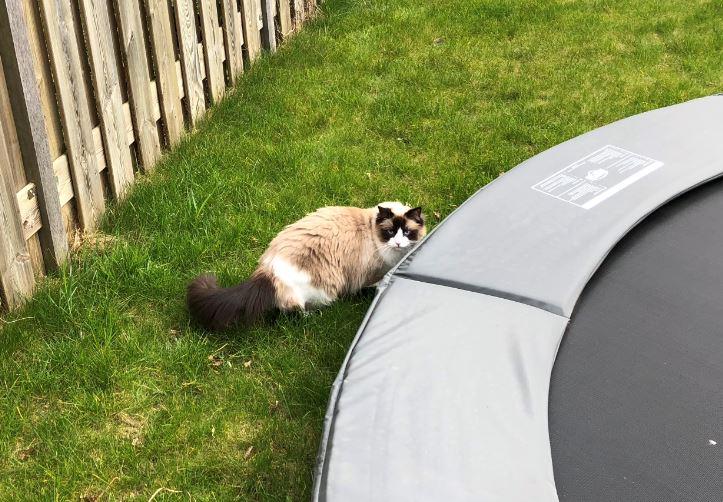 Kattenblog Mauws.nl - binnenkat of buitenkat4