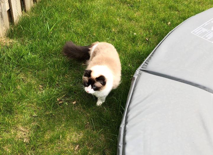 Kattenblog Mauws.nl - binnenkat of buitenkat5
