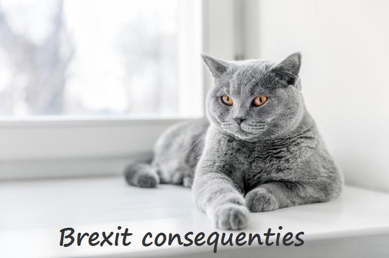 Mauws.nl - kattenblog - Brexit heeft consequenties voor Britse korthaar
