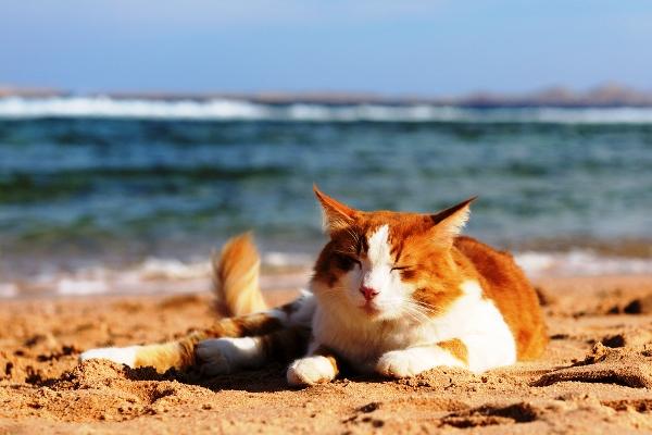 Kat op vakantie