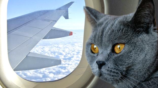 Vakantieperiode wat doe je met je kat