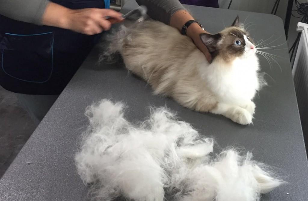 Hoe laat ik mijn kat wennen aan kammen?