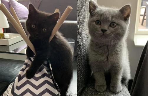 Meet Mila en Bo