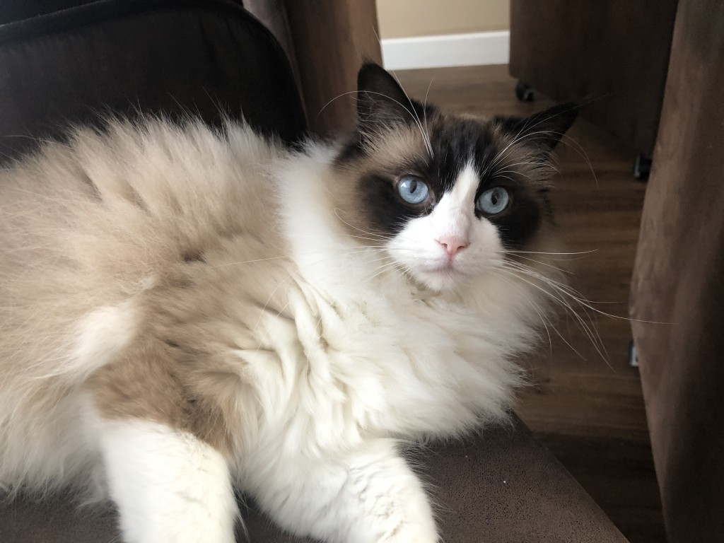 Kattenblog Mauws.nl - allergisch voor katten