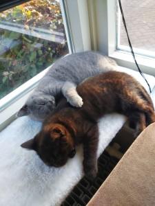 Kattenblog Mauws.nl - 10 tips voor een gelukkige kat