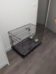 Kattenblog Mauws.nl - Bo en Mila ophalen