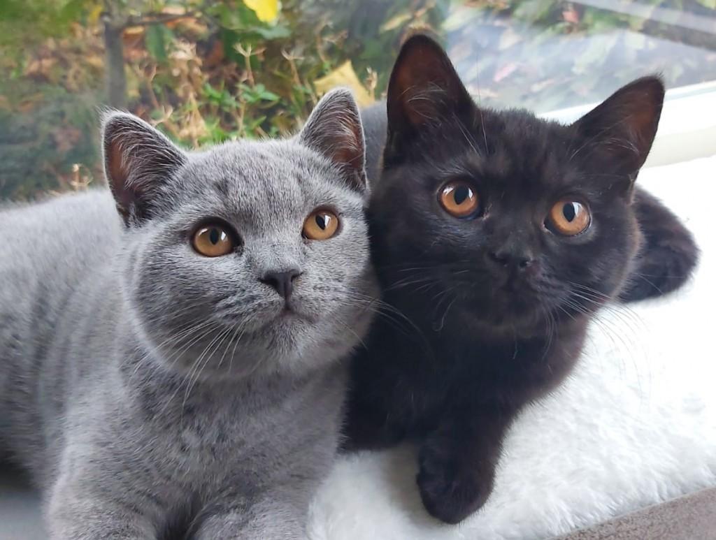 Kattenblog Mauws.nl - Bo en Mila 1 jaar